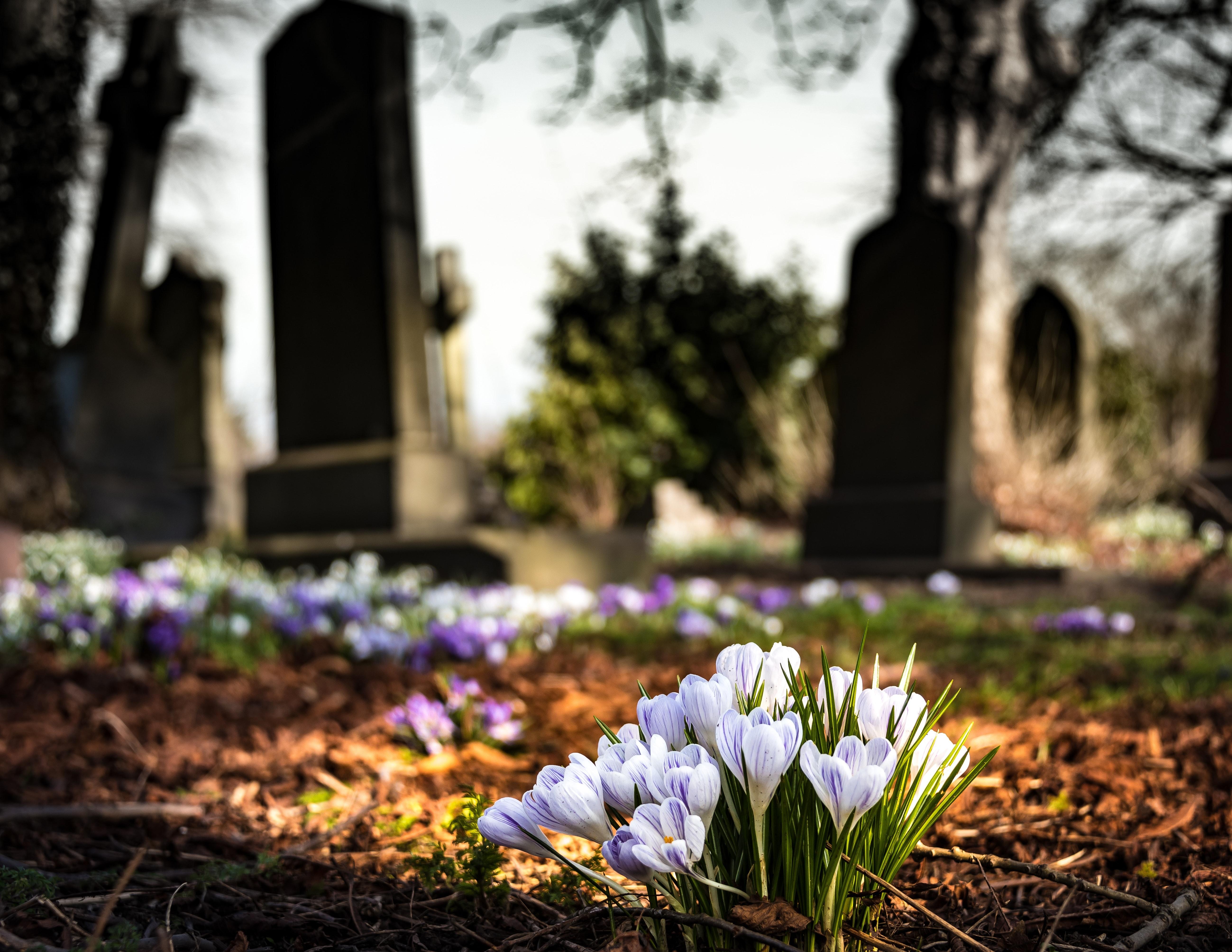 Zamknięcie cmentarzy – komunikat